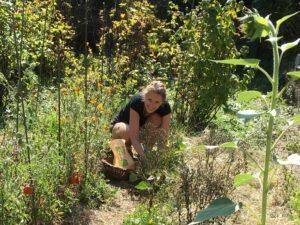 moi-jardiniere-cueillette-haricots